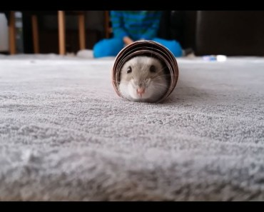 Funny cute little hamster - funny cute little hamster