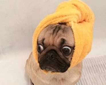Funny Dogs Just Don't Want to Bath Compilation NEW - funny dogs just dont want to bath compilation new