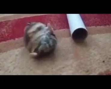 Funny hamster 2014 - funny hamster 2014