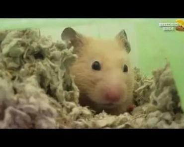FUNNY HAMSTER WAKING UP - funny hamster waking up