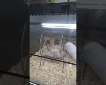 Funny hamsters workout - funny hamsters workout