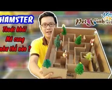 Giải mã mê cung, Hamster PetXinh thoát khỏi mê cung như thế nào? - giai ma me cung hamster petxinh thoat khoi me cung nhu the nao