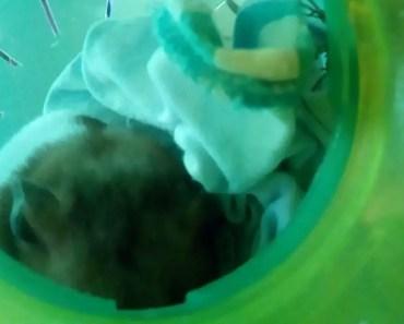 Hamster 2 - hamster 2
