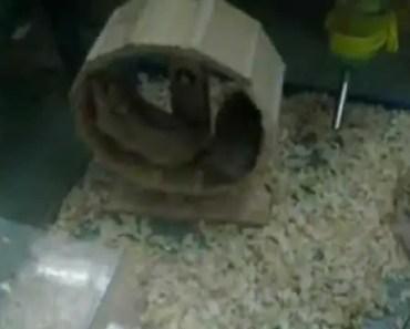 Hamster and wheel, funny.... - hamster and wheel funny