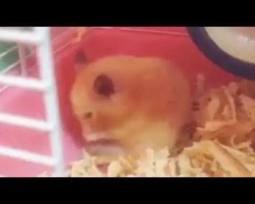 Hamster bear happy funny.... - hamster bear happy funny