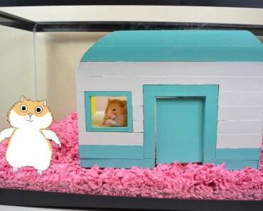 Hamster DIY! - Hamster Camper With Bunkbeds And Kitchen! - Hamster Cage Tour - hamster diy hamster camper with bunkbeds and kitchen hamster cage tour