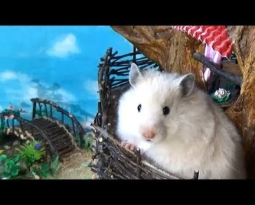 Hamster in a DIY Sylvanian Families Tree House - hamster in a diy sylvanian families tree house