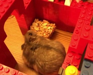 Hamster Maze Time 2 - hamster maze time 2