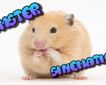 Hamster Sinematics - hamster sinematics