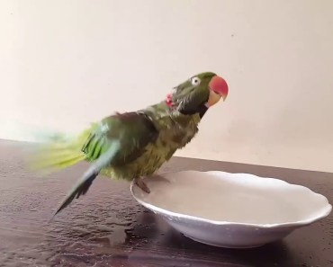 Have to meet my girlfriend - My funny parrot - have to meet my girlfriend my funny parrot
