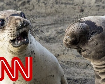 Is shocked seal the funniest wildlife photo of 2017? - is shocked seal the funniest wildlife photo of 2017