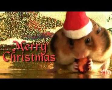 Merry Christmas Hamster - merry christmas hamster