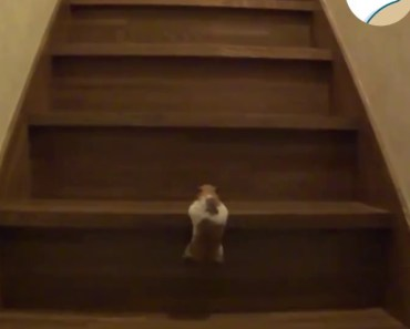 Must Watch! Cute Funny Hamster Trying to Climb! - must watch cute funny hamster trying to climb