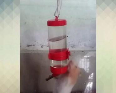 My pet hamster is crazy - my pet hamster is crazy