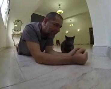 PABLLO VÍTOR QUASE FOI COMIDO PELO JOAQUIM!!! CAT AND HAMSTER PLAY TOGETHER - pabllo vitor quase foi comido pelo joaquim cat and hamster play together