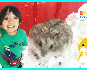 Ryan ToysReview first pet Buying Hamster from PetSmart - ryan toysreview first pet buying hamster from petsmart