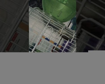 Funny hamster - 1515822401 funny hamster