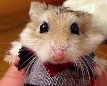 Funny Hamster - 1517395357 funny hamster
