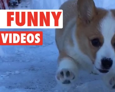 30 Funny Pet Videos Animal Compilation 2016 - 30 funny pet videos animal compilation 2016