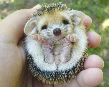 8 Of The Cutest Pets You Could Ever Own - 8 of the cutest pets you could ever own