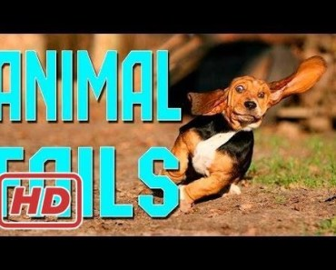 Animal Fails of the Week 1 April 2016 - Animal Fail Videos - Animal Fails Compilation 2016 - animal fails of the week 1 april 2016 animal fail videos animal fails compilation 2016