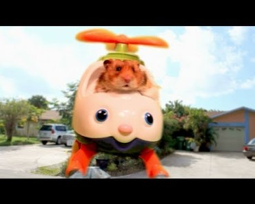 'Come Fly With Me' - The Talking Hamster - come fly with me the talking hamster