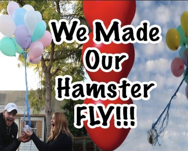 CRAZY FOOTAGE OF HOW WE MADE OUR HAMSTER FLY GONE WRONG !! NOT CLICKBAIT - crazy footage of how we made our hamster fly gone wrong not clickbait