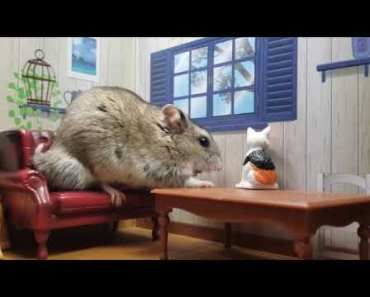 CUTE TINY HAMSTER EATING IN TINY MANSION - cute tiny hamster eating in tiny mansion
