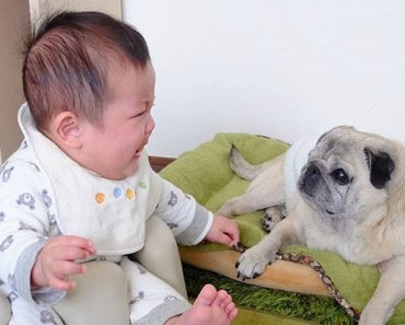 Cutest & Funniest Babies Playing With Cute Puppies & Dogs - Babies Funny Video with Funny Dogs - cutest funniest babies playing with cute puppies dogs babies funny video with funny dogs