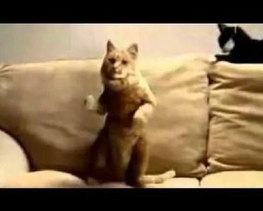 Dancing Cats Compilation - dancing cats compilation