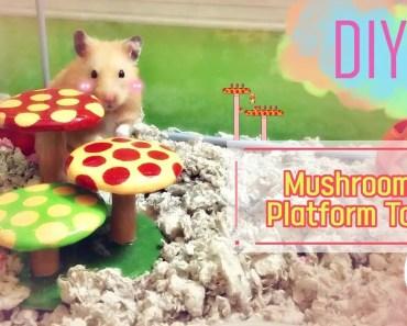 DIY | HAMSTER - Super Mario Mushroom Toy - diy hamster super mario mushroom toy