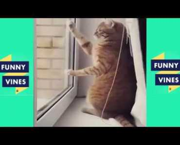 funny animals video try not to laugh or grin funny animal vine try not to laugh challenge Funny Vine - funny animals video try not to laugh or grin funny animal vine try not to laugh challenge funny vine