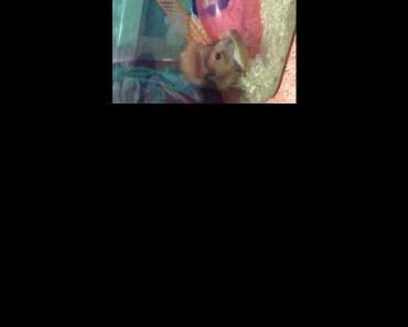 Funny hamster and bread - funny hamster and bread
