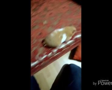 Funny hamster cute animalss videos - funny hamster cute animalss videos