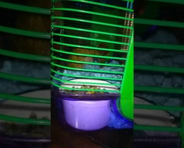 Funny hamster part 1 - funny hamster part 1