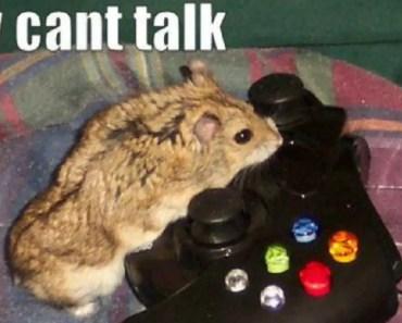 Funny hamster pichers - funny hamster pichers