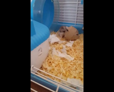 Funny hamster trying to get his treat - funny hamster trying to get his treat