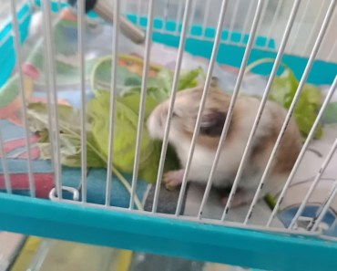 Funny is my hamster by#Leonardo - funny is my hamster byleonardo