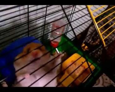 Funny videos feeding the hamster - funny videos feeding the hamster