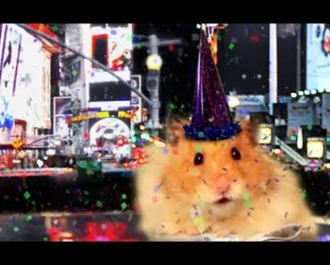Hammy's Nutty New Year's Eve 2014 - The Talking Hamster - hammys nutty new years eve 2014 the talking hamster