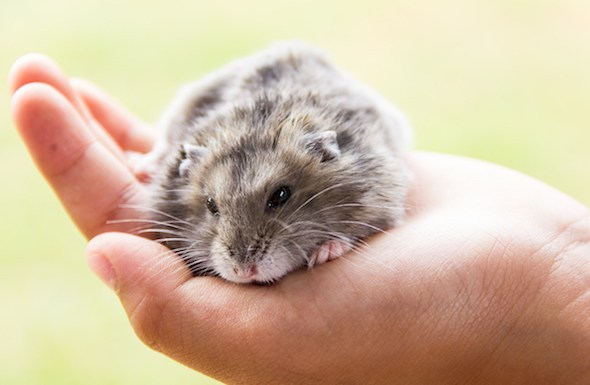 Best Foods and Treats for Your Hamster