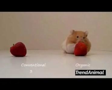 Hamster prefers organic! - hamster prefers organic