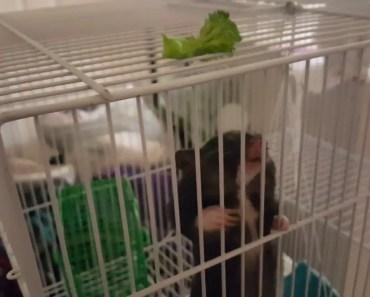 Hamster stuffs huge brocolie in mouth - hamster stuffs huge brocolie in mouth