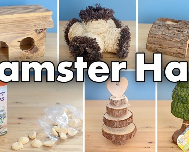 Hamster Supply Haul | November 2016 - hamster supply haul november 2016