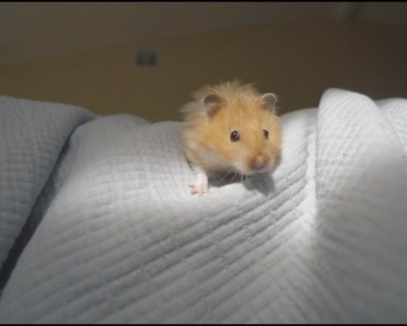 hanging out with our hamster in bed - hanging out with our hamster in bed