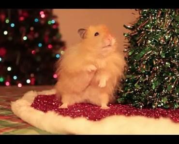 Jingle Nuts - Hammy the Talking Hamster's Holiday Video - jingle nuts hammy the talking hamsters holiday video
