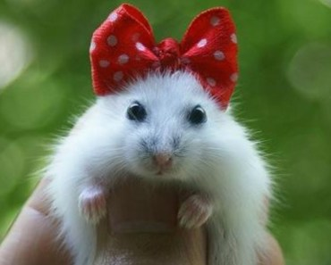 My Funny Hamster does has hes told - my funny hamster does has hes told