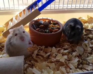 olhem o que comprei pros Hamster - Pets Na Net - olhem o que comprei pros hamster pets na net
