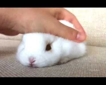 Rabbit - A Funny And Cute Bunny Videos Compilation || NEW HD - rabbit a funny and cute bunny videos compilation new hd