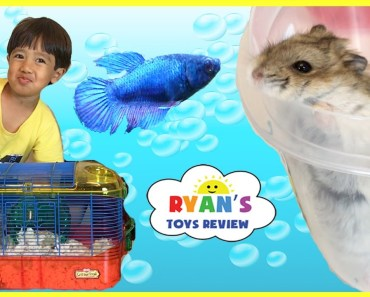 Ryan's First Pet Fish - ryans first pet fish